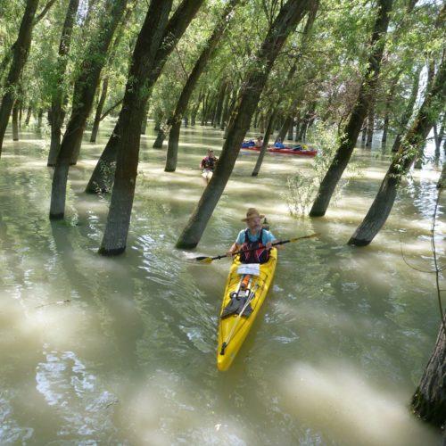 Slalom im überschwemmten Auwald