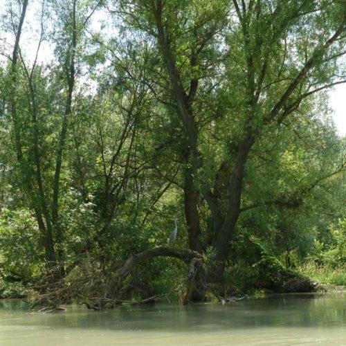 20190611_bis_16_Mosoni_und_Ungarische_Donau - 26